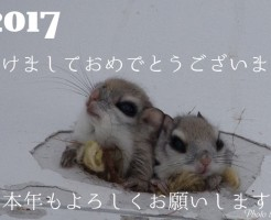 2017-1-2_1